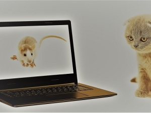 cat, rat and laptop on a white background isolated