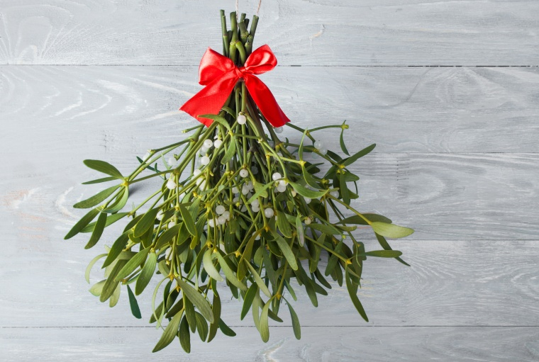 Broom from green mistletoe