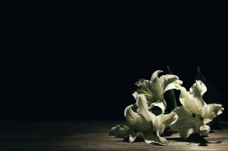 Beautiful lilies on dark background with space for text. Funeral flowers