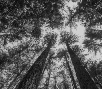 looking up at a sunlit forest through a fisheye lens
